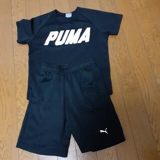 プーマ(PUMA)のPUMA ハーフパンツ&Tシャツ(その他)