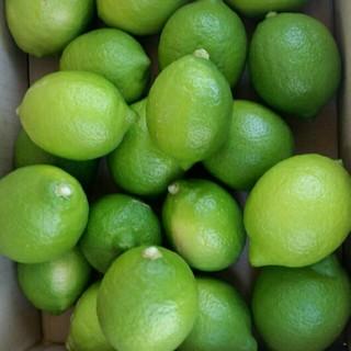 国産無農薬 グリーンレモン 4kg 送料無料(フルーツ)