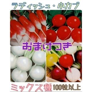 野菜種 カラフルラディッシュ 小かぶ 家庭菜園 プランター(野菜)