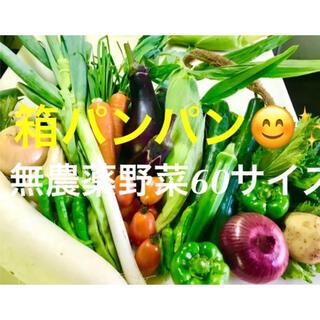 今日採りたて野菜を60サイズ一杯にします 無農薬