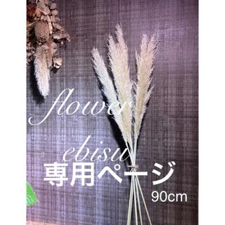 ドライフラワー 花材 パンパスグラス 5本