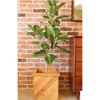 JOURNAL STANDARD - ACME Furniture   PLT PLANTS BOX CUBE