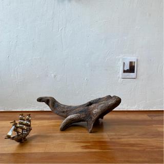 土佐の鯨 流木