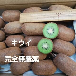キウイフルーツ 2.5kg(その他)