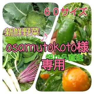 新鮮野菜 60サイズ箱いっぱい野菜詰め合わせセット(野菜)