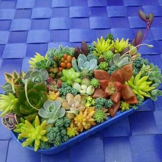 flowerroom様専用❤このまま育てられる多肉植物寄せ植え❤(その他)