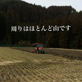 ひなた様専用 ヒノヒカリ 小分け 食品/飲料/酒の食品(米/穀物)の商品写真