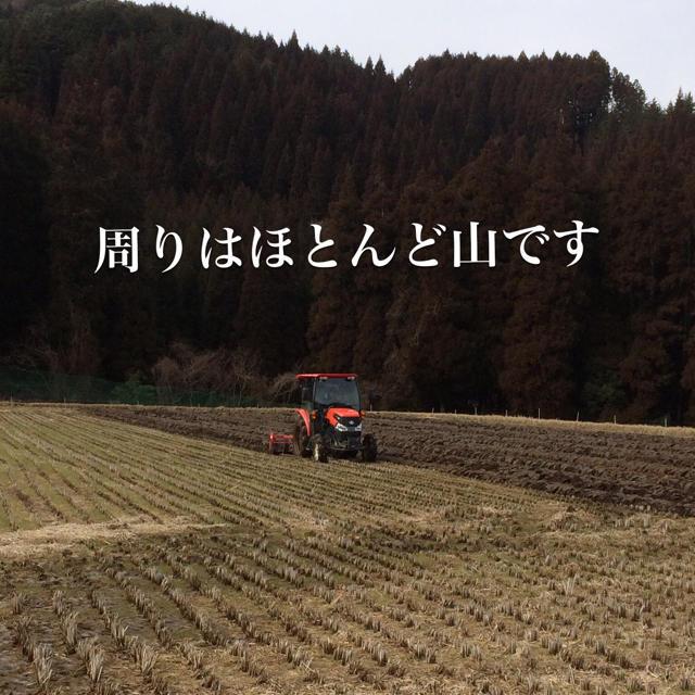 イズミ様専用 食品/飲料/酒の食品(米/穀物)の商品写真