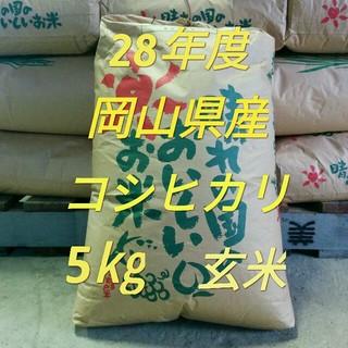 新米コシヒカリ5㎏ 食品/飲料/酒の食品(米/穀物)の商品写真