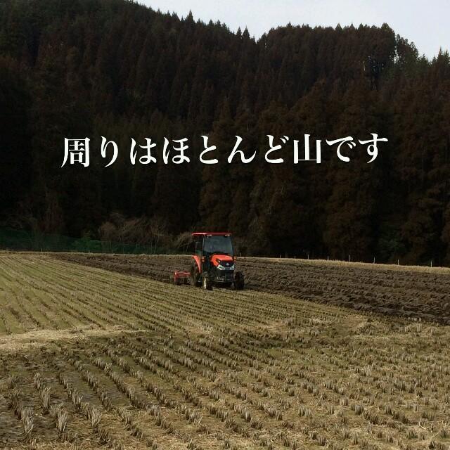 りっちょん様専用 食品/飲料/酒の食品(米/穀物)の商品写真