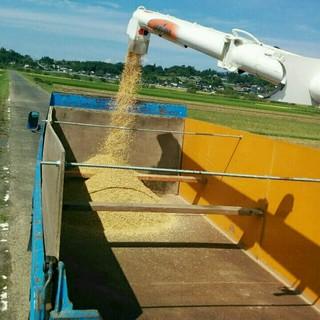農家直送新米コシヒカリ10㎏ 食品/飲料/酒の食品(米/穀物)の商品写真