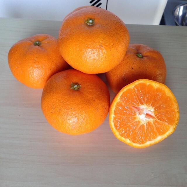 yuka♡様専用 温州みかん(青島)10kg(箱込み)×2箱 食品/飲料/酒の食品(フルーツ)の商品写真