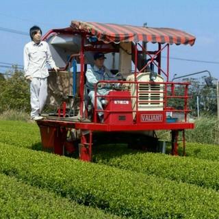 オーガニック粉末茶 無農薬 粉末緑茶 粉茶(茶)