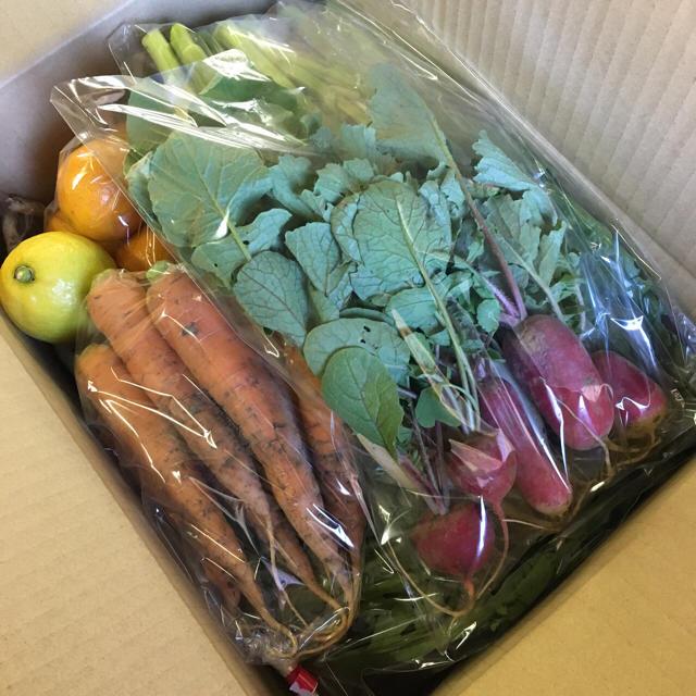 [送料込み]愛知産 季節の野菜セット80サイズ 食品/飲料/酒の食品(野菜)の商品写真