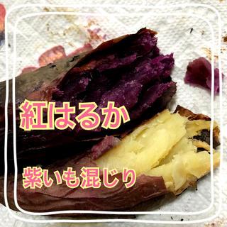 紅はるか 紫いも混じり 2キロ 宅配便(野菜)