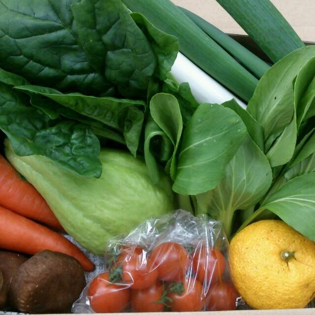 ☆70サイズ☆岡山産 新鮮野菜 食品/飲料/酒の食品(野菜)の商品写真