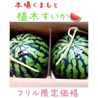 今年初出荷★一番なり植木すいか1玉/お試し価格(野菜)