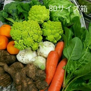 春のお野菜 野菜詰め合わせ 10種類(野菜)