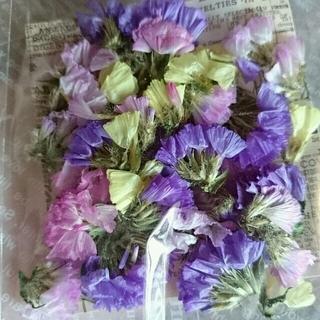 【あぉ様専用です】スターチス 3色*ドライフラワー 花材 材料パーツ(ドライフラワー)