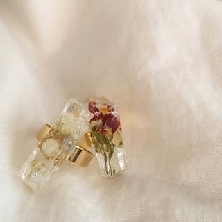 dryflower ring 💐(リング)