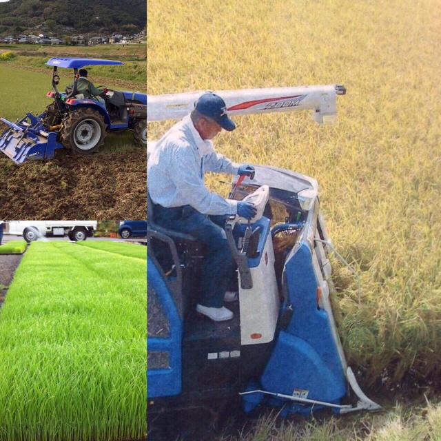 [残留農薬検査済]28年産玄米4kgヒノヒカリ 食品/飲料/酒の食品(米/穀物)の商品写真