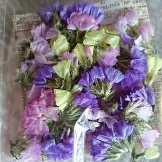 スターチス 3色*ドライフラワー 花材 材料パーツ(ドライフラワー)