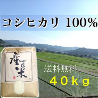 【閉店様専用】愛媛県産こしひかり100%   40kg  農家直送 食品/飲料/酒の食品(米/穀物)の商品写真
