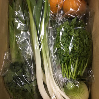 [送料込み]愛知産 新鮮!季節の野菜セット80サイズ(野菜)