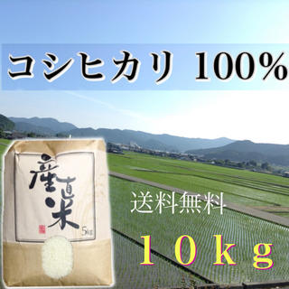 【mayumama様専用】愛媛県産こしひかり100%   10kg  農家直送 食品/飲料/酒の食品(米/穀物)の商品写真