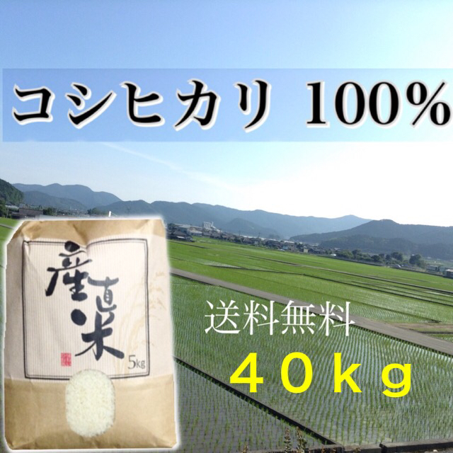 【yuni様専用】愛媛県産こしひかり100%  40kg  農家直送 食品/飲料/酒の食品(米/穀物)の商品写真