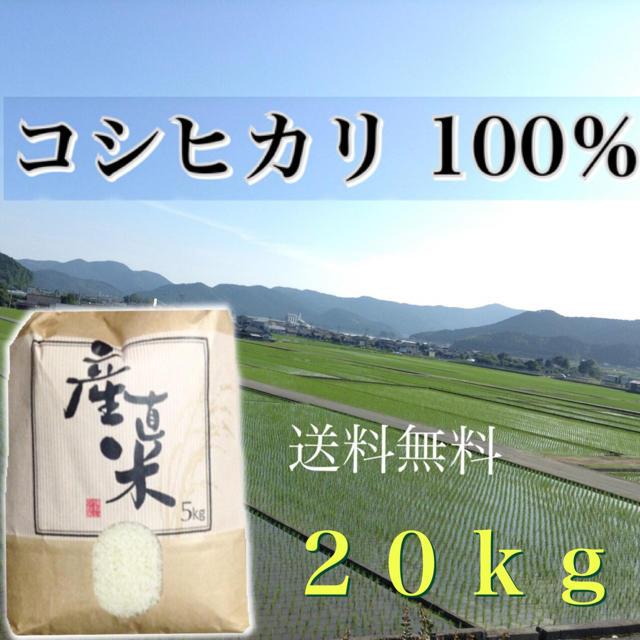 【メイサ様専用】愛媛県産こしひかり100%  20kg  農家直送 食品/飲料/酒の食品(米/穀物)の商品写真