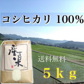 【リピーター様限定販売】愛媛県産こしひかり100%   5kg  農家直送 食品/飲料/酒の食品(米/穀物)の商品写真