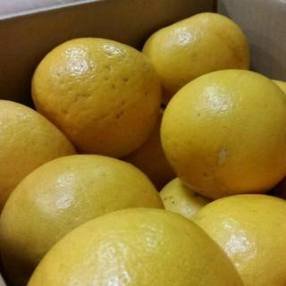 《今だけ大特価!!》熊本特産☆ジューシーな河内晩かんオレンジ約10kg 送料無料(フルーツ)
