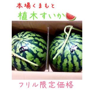 今年初出荷★一番なり植木すいか2玉/お試し価格(3)(野菜)