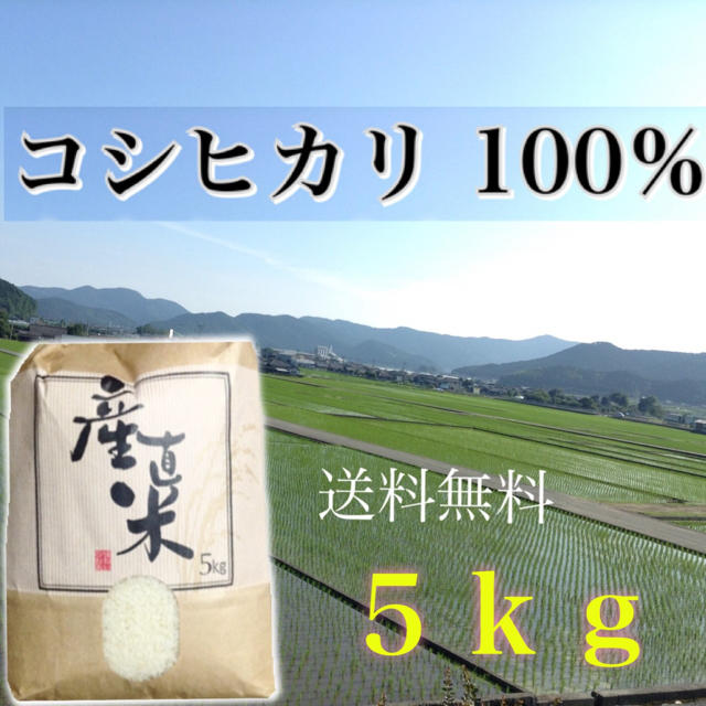【あゆみん様専用】愛媛県産こしひかり100%   5kg  農家直送 食品/飲料/酒の食品(米/穀物)の商品写真