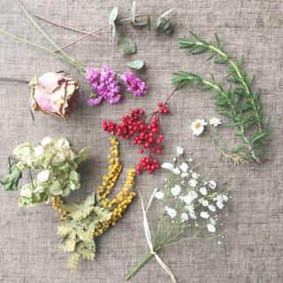 春色花材詰め合わせ⑦☆送料無料 商品52(ドライフラワー)