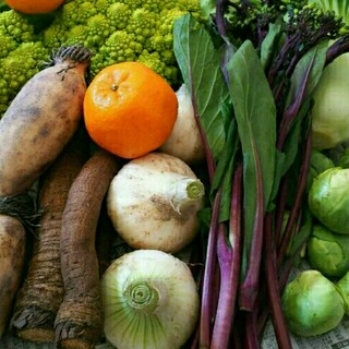 春のお野菜➰! 野菜詰め合わせ(野菜)