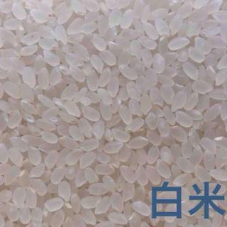 【かな様専用】愛媛県産こしひかり100%  20kg  農家直送 食品/飲料/酒の食品(米/穀物)の商品写真