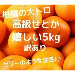 数量限定☆せとか 柑橘 みかん 高級 5kg 訳あり(フルーツ)