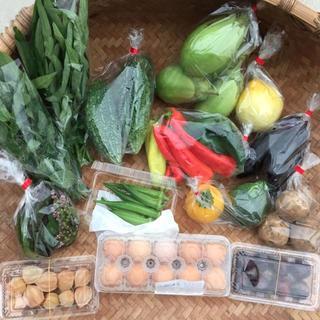 【とれたて無農薬!】自然豊かな野菜セット♪/ 岡山県産(野菜)