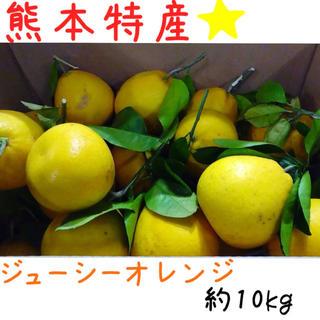 熊本産·✩̋·ジューシーオレンジ☆河内晩柑約10kg(家庭用)No4(フルーツ)