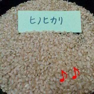 28年滋賀県産ひのひかり玄米30㎏   1等米 食品/飲料/酒の食品(米/穀物)の商品写真