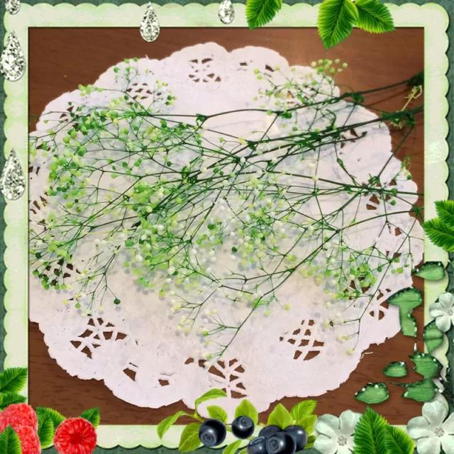 プリザーブドフラワー かすみ草 2g ハンドメイドのフラワー/ガーデン(プリザーブドフラワー)の商品写真