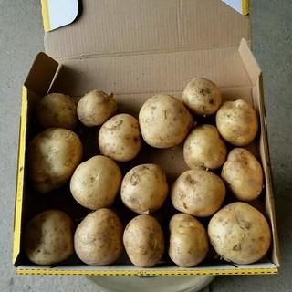 残りわずか 国産 無農薬 新じゃが ハウス栽培 送料無料(野菜)