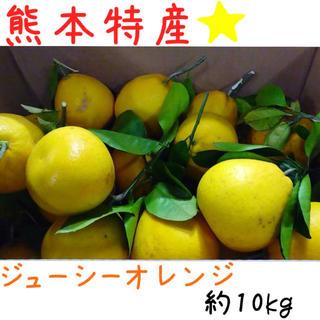 熊本産·✩̋·ジューシーオレンジ☆河内晩柑約10kg(家庭用)10(フルーツ)