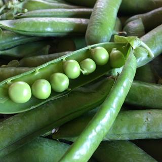 鞘付き グリーンピース 800g(野菜)