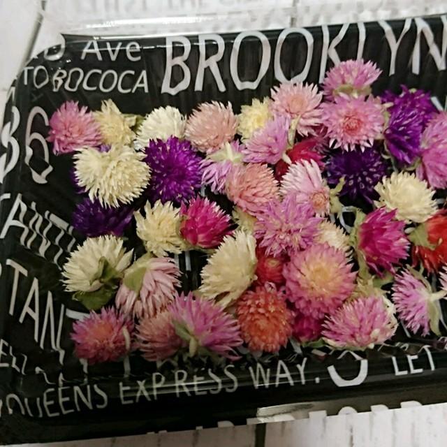 在庫少❣️ドライフラワー♡千日紅 ヘッド 60個 詰め合わせ 花材 ハンドメイド ハンドメイドのフラワー/ガーデン(ドライフラワー)の商品写真