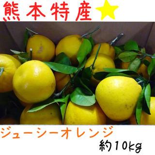 熊本産·✩̋·ジューシーオレンジ☆河内晩柑約10kg(家庭用)6(フルーツ)
