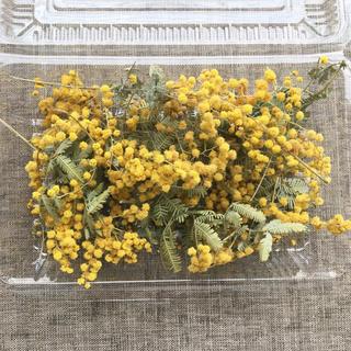ミモザのお花と葉セット*送料無料 商品36(ドライフラワー)