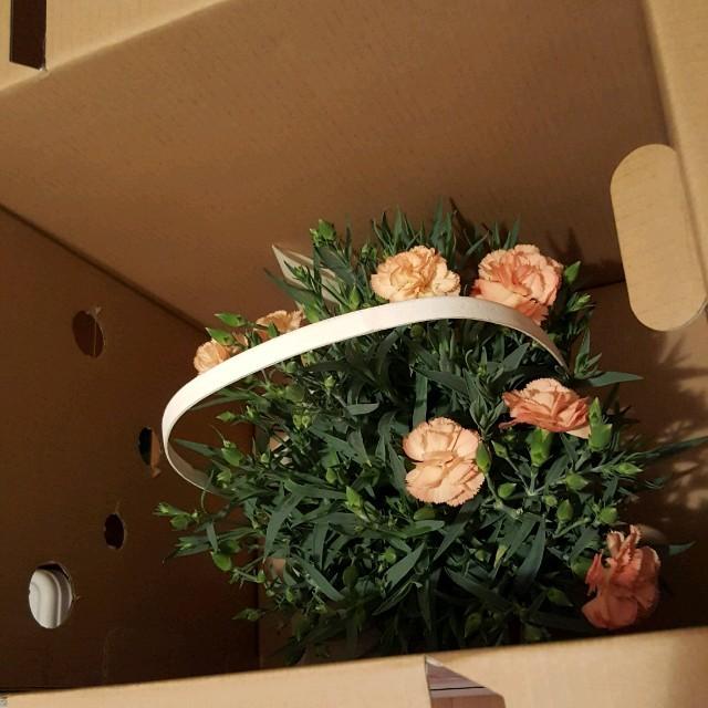 売り切れました‼カーネーションオレンジ ハンドメイドのフラワー/ガーデン(プリザーブドフラワー)の商品写真